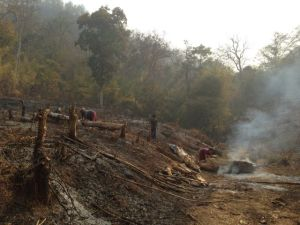 Forest fires 2