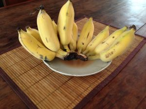 Fresh bananas - yummi!